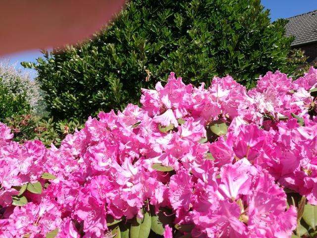 Garten Mai2020